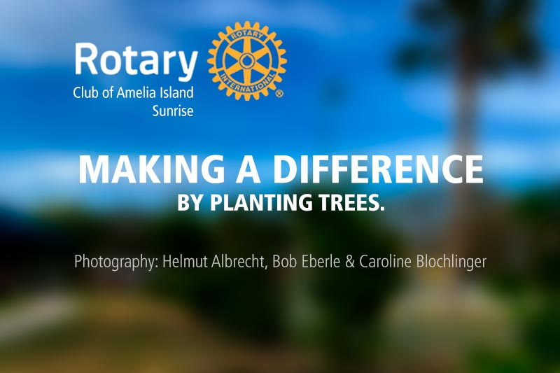 Making a difference by planting trees